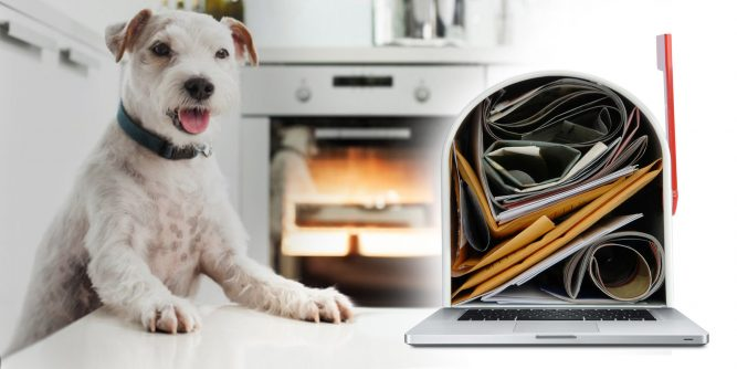 Spam Watchdog